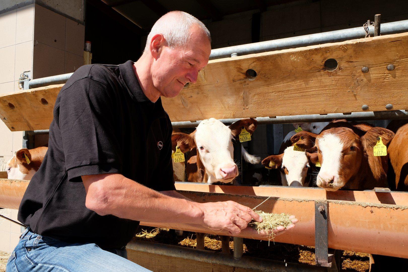 Christian Strobl füttert Kälber mit Stroh und Milchaustauscher