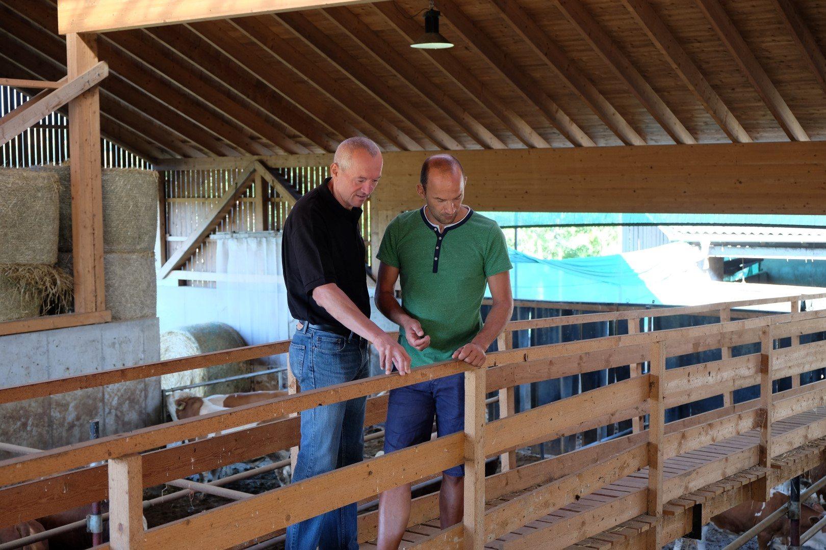 Christoph Schild (rechts) und Christian Strobl (links) stehen auf einer Holzbrücke im Stall und beobachten Mastrinder.