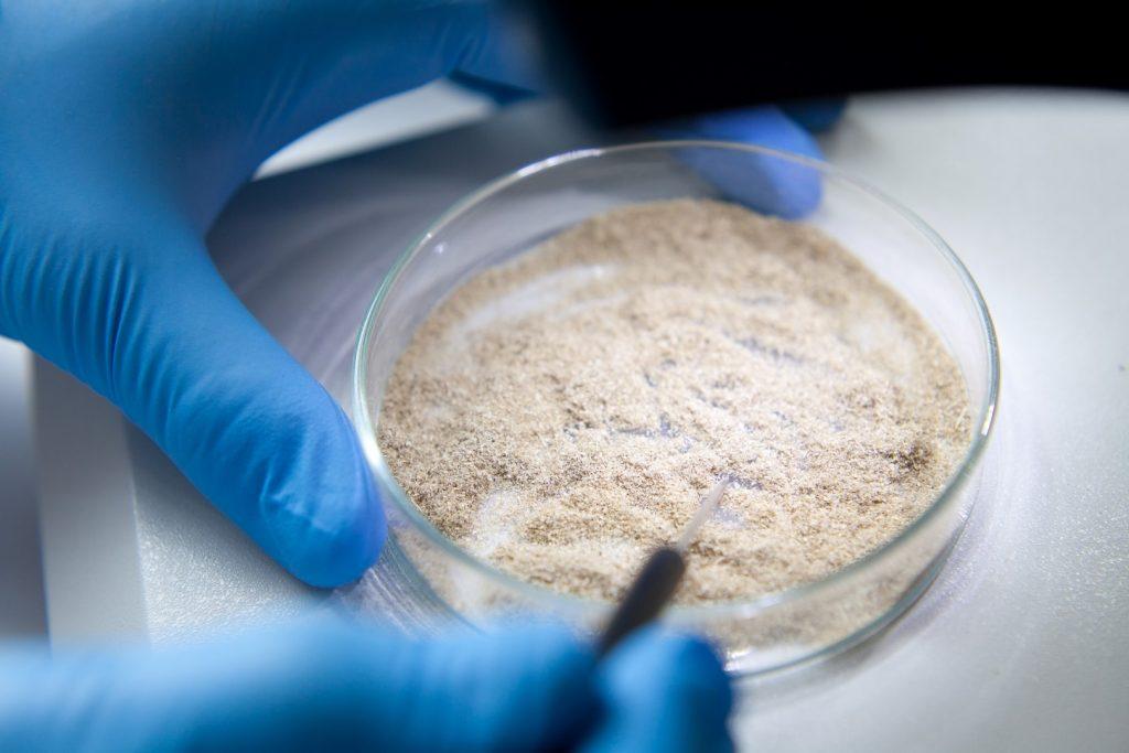 Flache Petrischale mit Futtermittelprobe