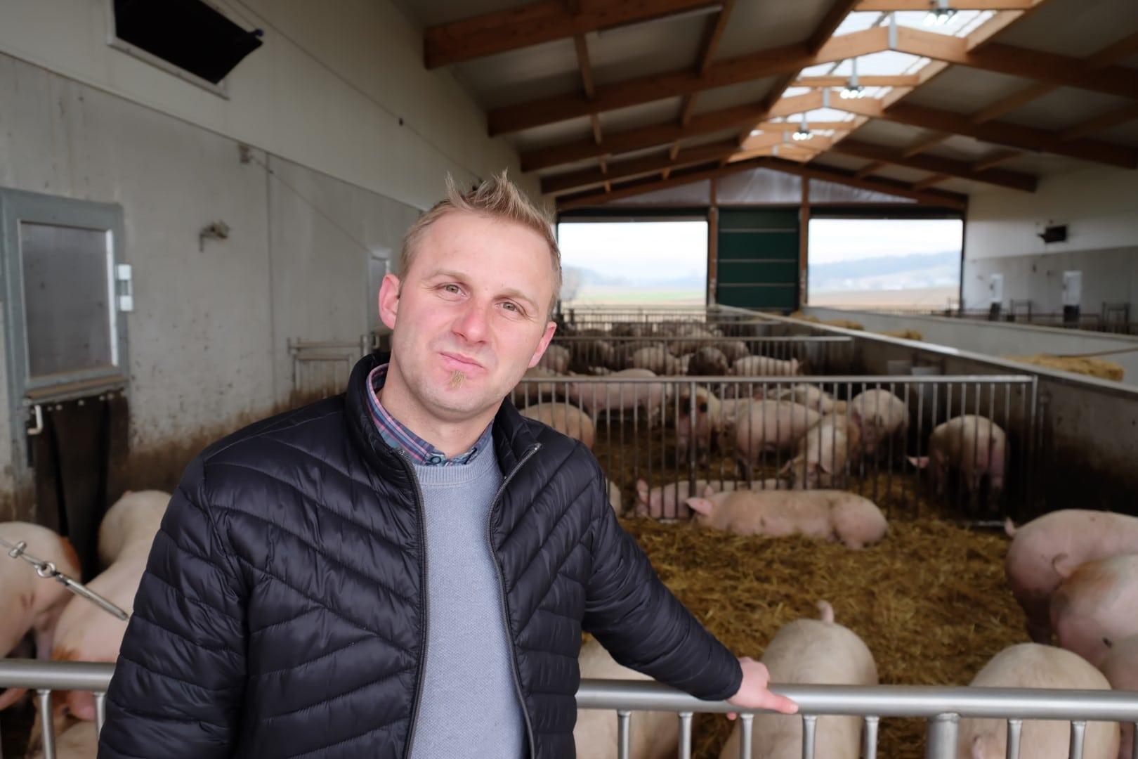 Markus Brankl bei gesunden Schweinen im Stall.